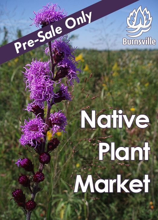 Close up of purple blazing star flower against a field. Text: Presale Only. Native Plant Market.